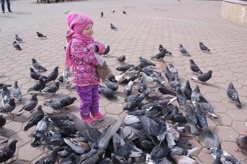Болезнь и голуби: томичей предостерегли от контакта с «летучими крысами»