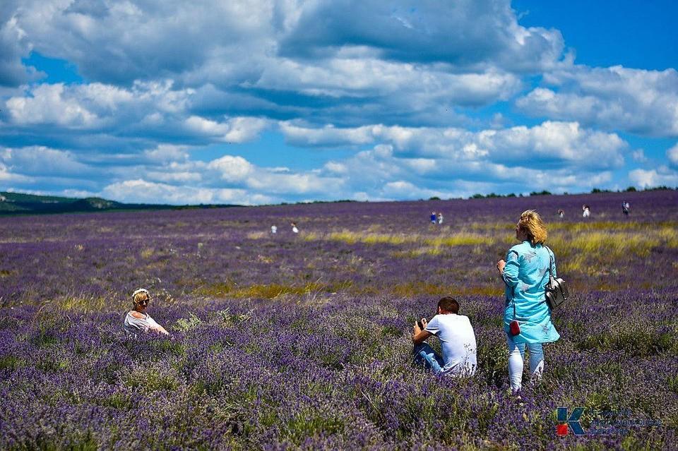 Крымские лавандовые поля. Фото: Владимир Прошкин