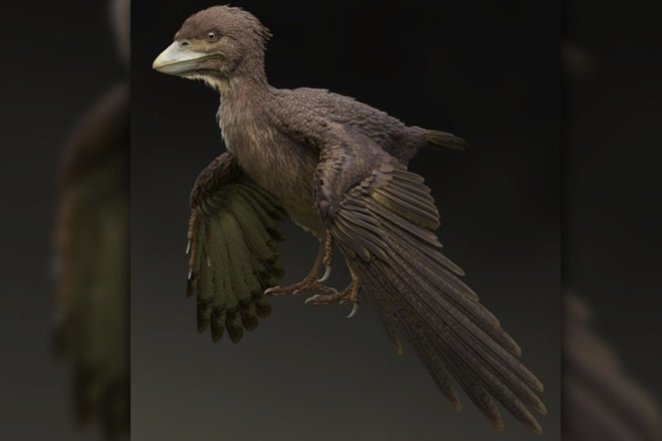 Пернатый малютка уже умел летать, взмахивая крыльями. Путь и не очень хорошо.