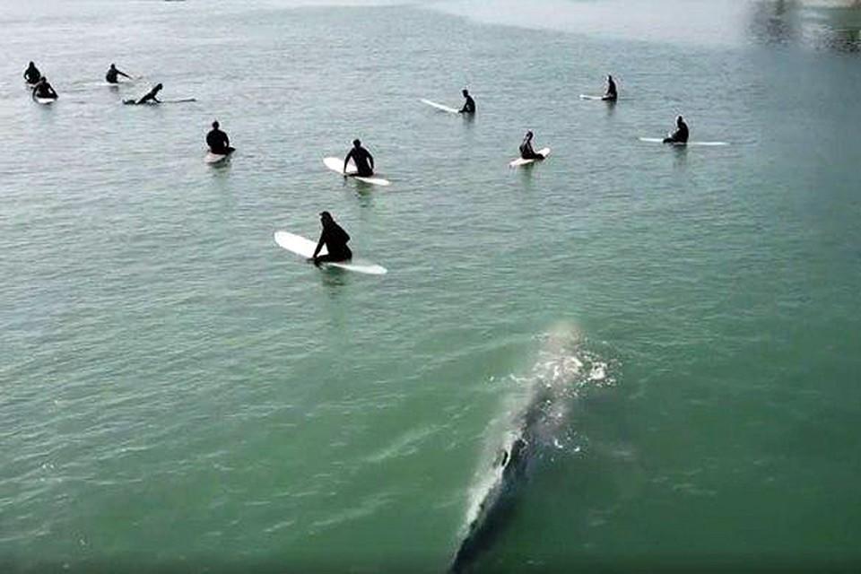 Всё время, пока кит подплывал то к одному человеку, то к другому, сёрферы сохраняли спокойствие и старались не двигаться с места