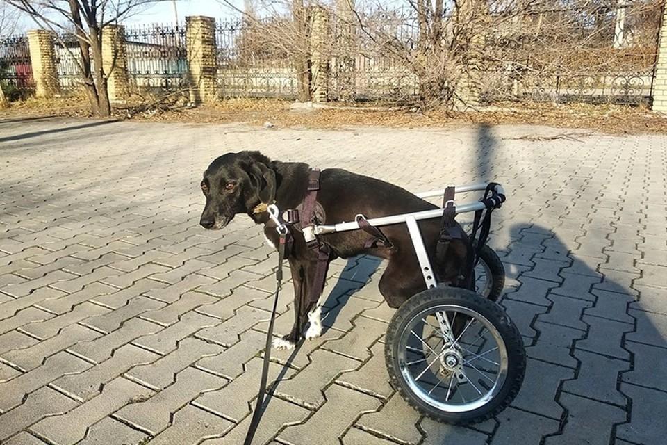 """Рокки может бегать - теперь ему нужна собственная инвалидная коляска. Фото: приют """"4 ЛАПКИ"""""""