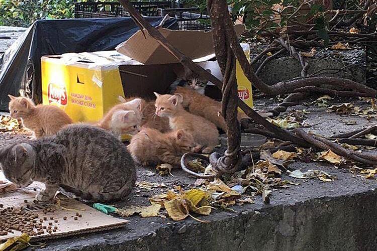 """В Сочи появилась свалка бездомных котят. Фото: фонд помощи животным """"Мягкие сердца"""""""