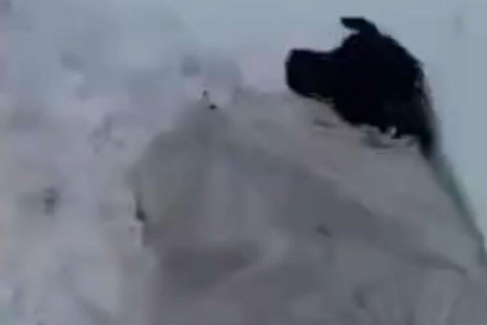 Собака продрогла до костей Фото: стопкадр с видео Жесть Красноярска [Регион24]