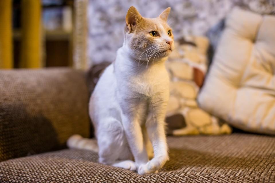 """Дюшес - ласковый и добрый кот. Фото: """"Мягкие сердца"""""""