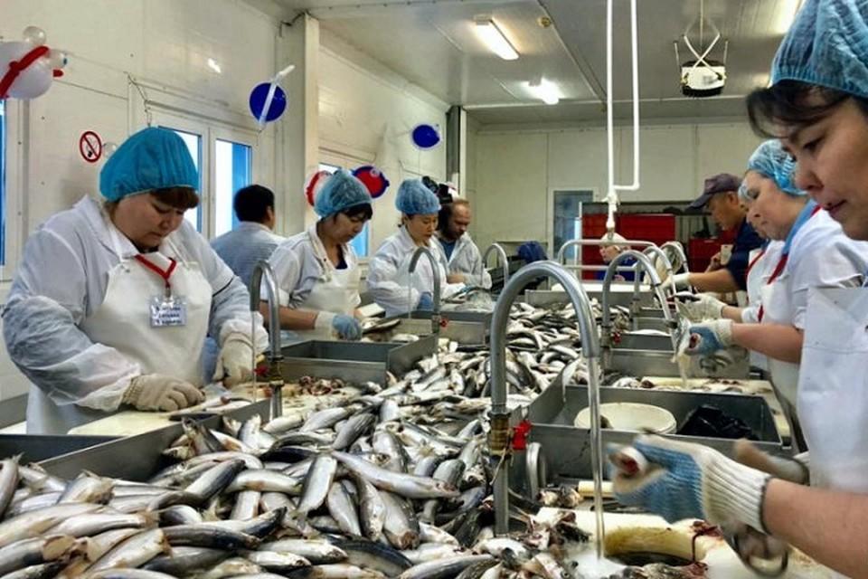 Салехардский рыбокомбинат стал победителем конкурса «Лучшее на Ямале - 2019». Фото с сайта администрации города Салехард