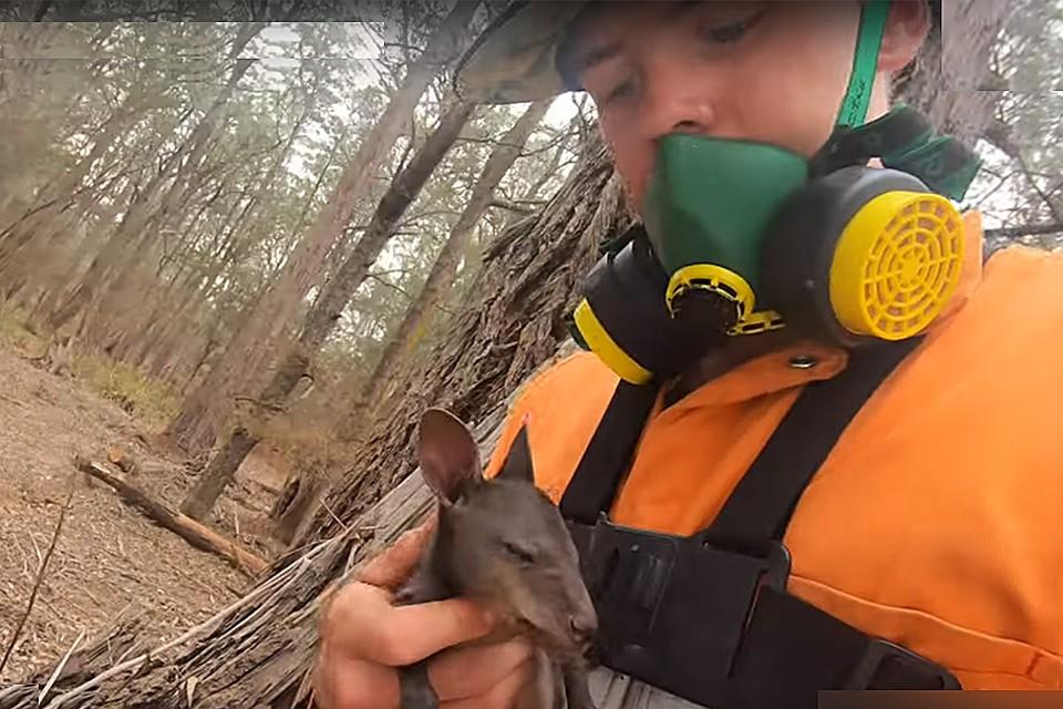 Австралийский пожарный спас осиротевшего кенгуренка