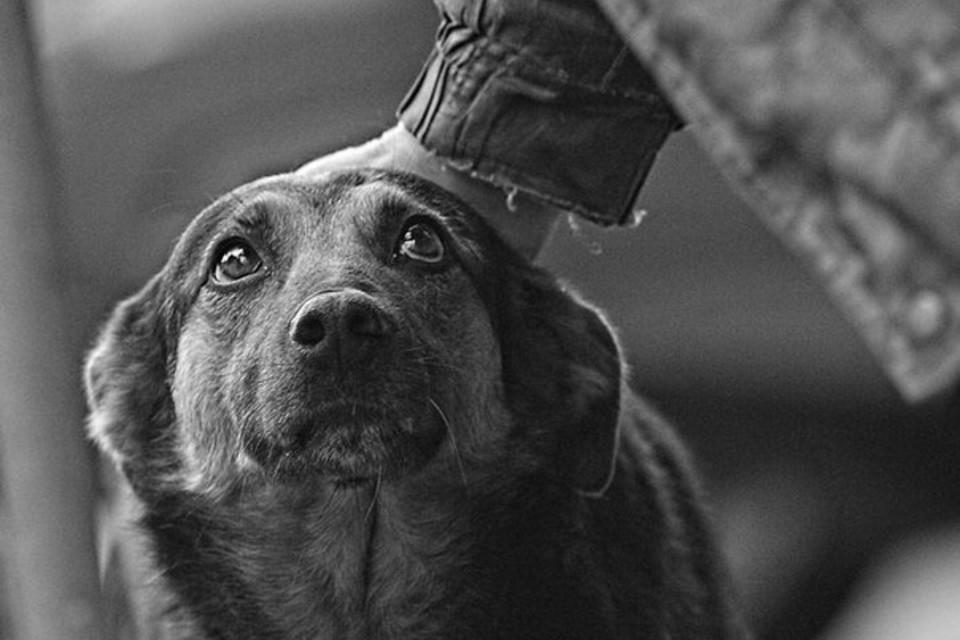 Во всех бедах животных виноват всегда только человек. Фото: liveinternet.ru
