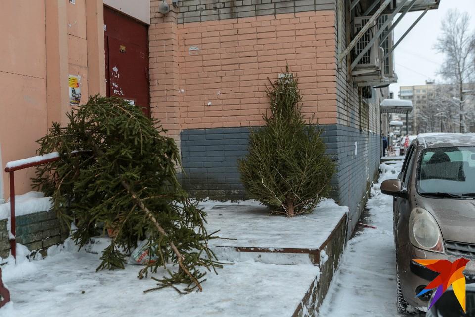 В Лесопарке состоится турнир по метанию новогодних елок.