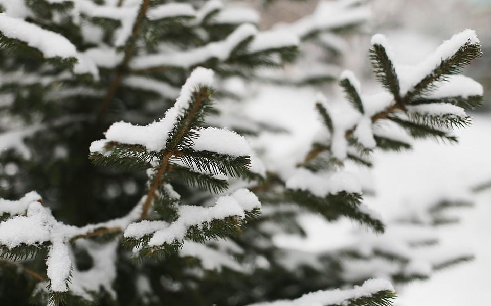 В Красноярском крае с начала года от переохлаждения погибли 4 человека