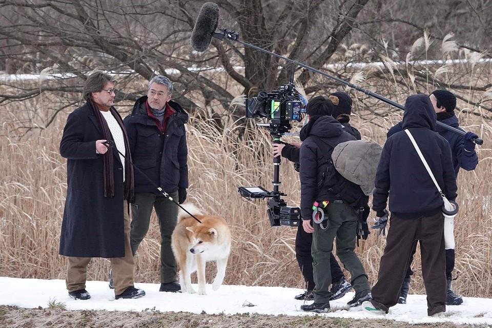 Александр Домогаров выгуливает собаку, сильно похожую на Хатико.