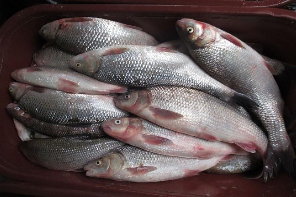 На кишиневском рынке продают виды рыб, занесенные в Красную книгу