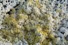 Коллекционеры просят камчатских ученых поделиться минералами, впервые открытыми в России