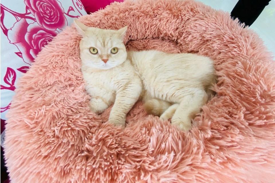 «Без кота я никуда»: чиновники из Забайкалья помогли эвакуировать рыжего британца из охваченного коронавирусом Китая. Фото: предоставлено героем публикации.