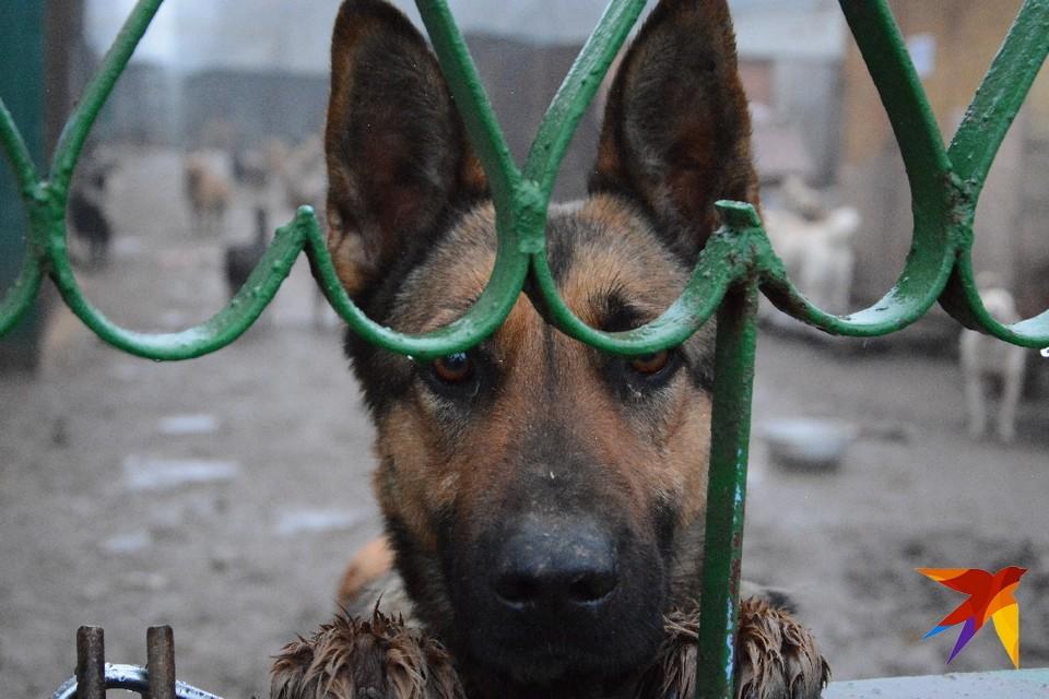 Утро на Центролите. Собаки всю ночь провели под дождем под открытым небом.