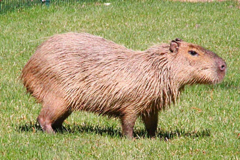 «Жизненно необходима помощь»: зоопарк «Лимпопо» просит нижегородцев поддержать животных. ФОТО:nnzoo.ru