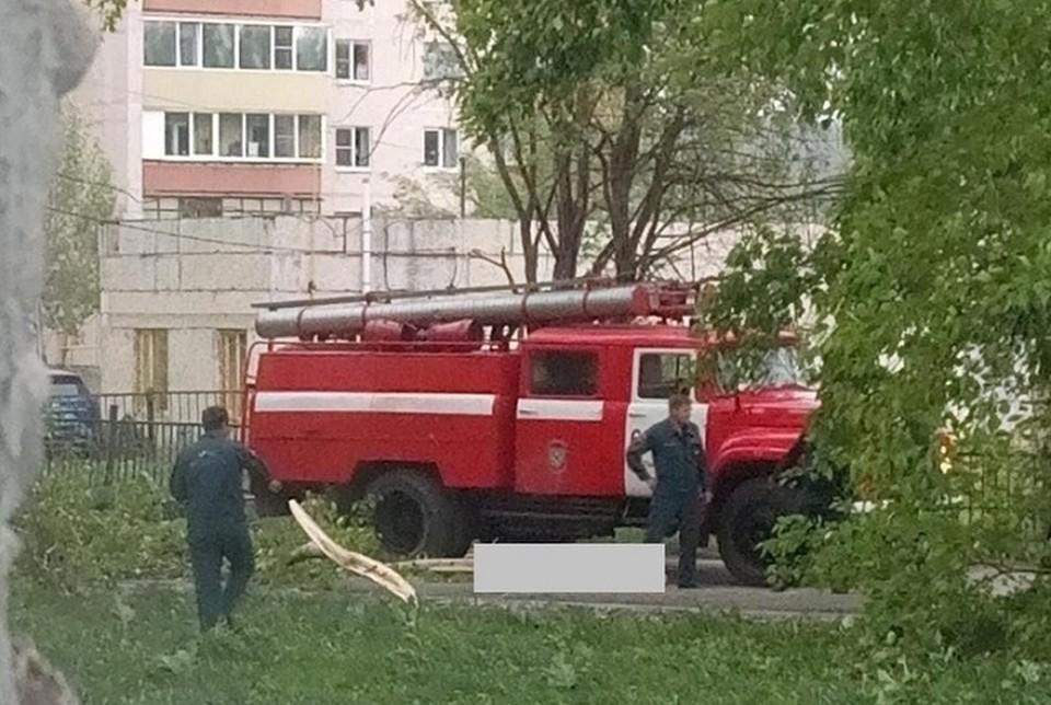 После урагана в больнице погибла бабушка, которую придавило гигантской веткой. Фото: пресс-служба СКР по Свердловской области