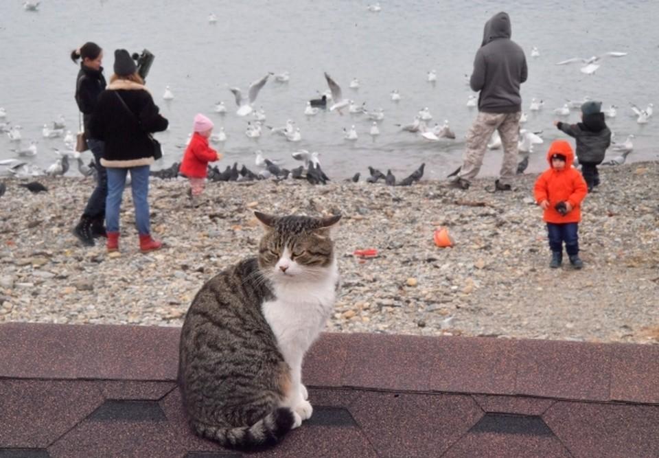 В июне 2020 года во Владивостоке будет прохладно и дождливо