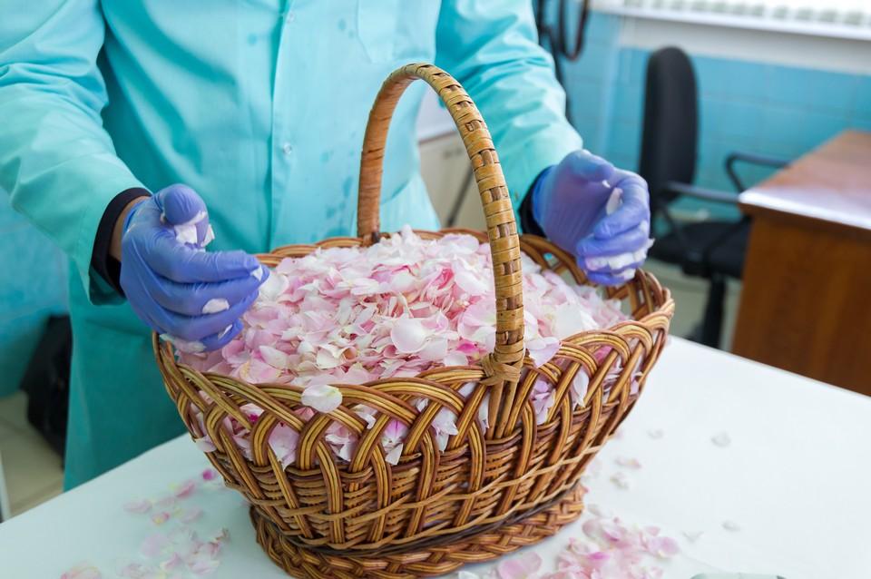 Крымские специалисты воссоздают забытый способ получения экстракта лепестков розы