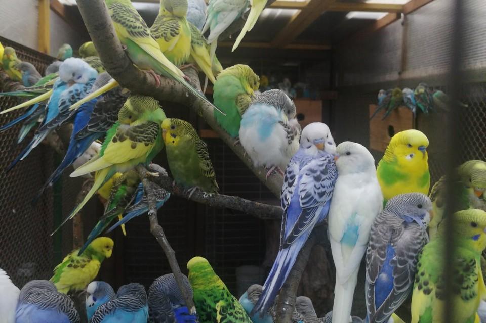 500 попугаев, изъятых на границе, доставили в зоопарк. Фото: Жлобинского зоопарка