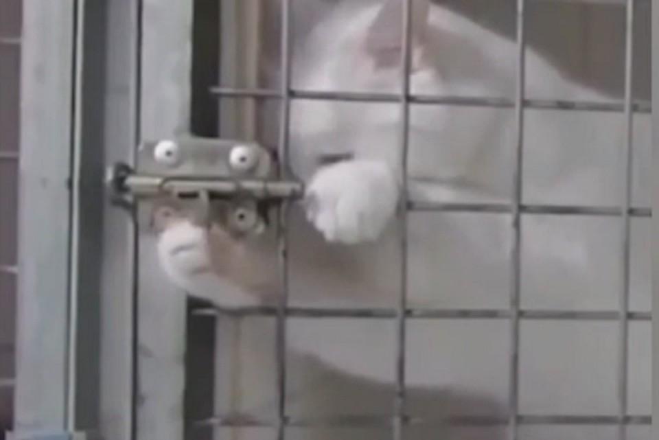 Кот показал, что нет неразрешимых препятствий