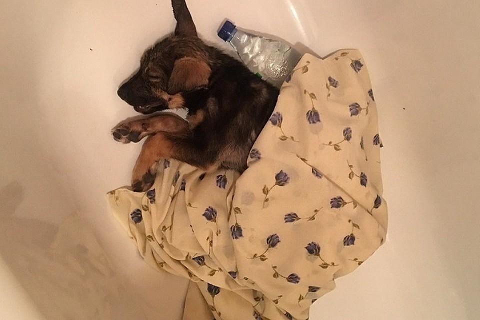 Ямальская мошкара до смерти замучила беспомощного щенка Фото: Елена Политковская