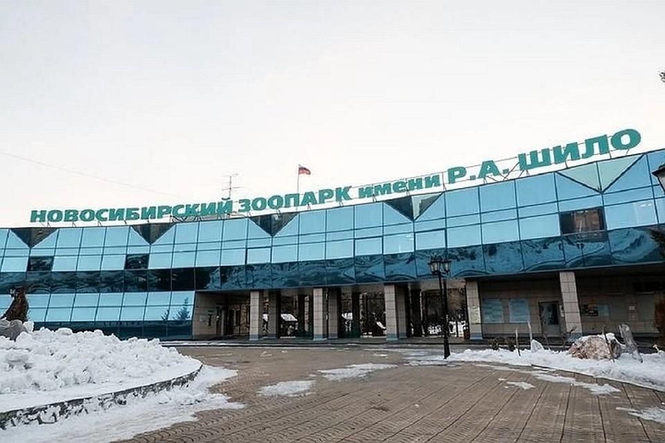 Зоопарк в Новосибирске откроется с 24 июня.
