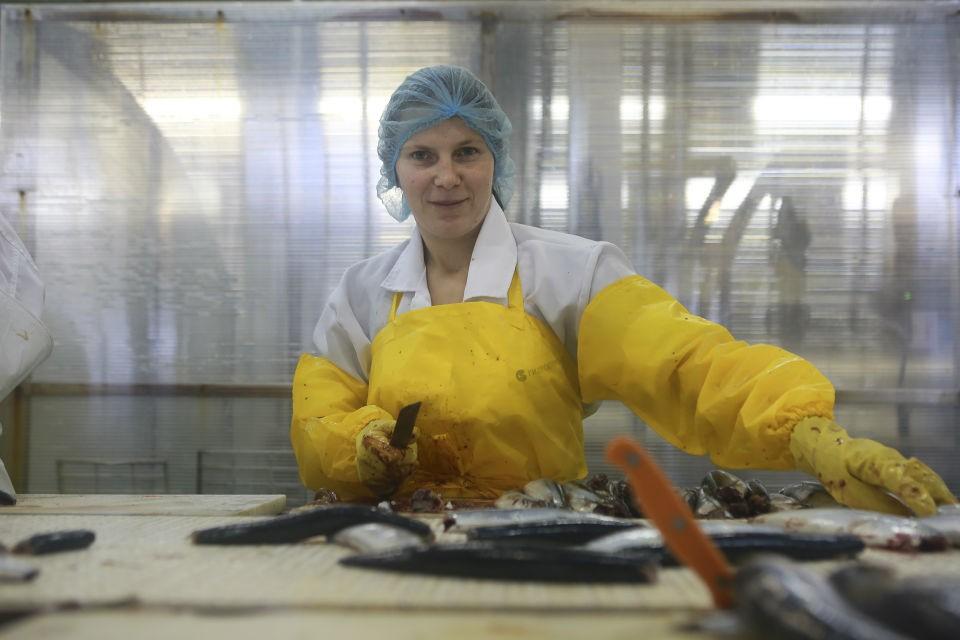 В Мурманской области откроются три рыбоперерабатывающих завода.