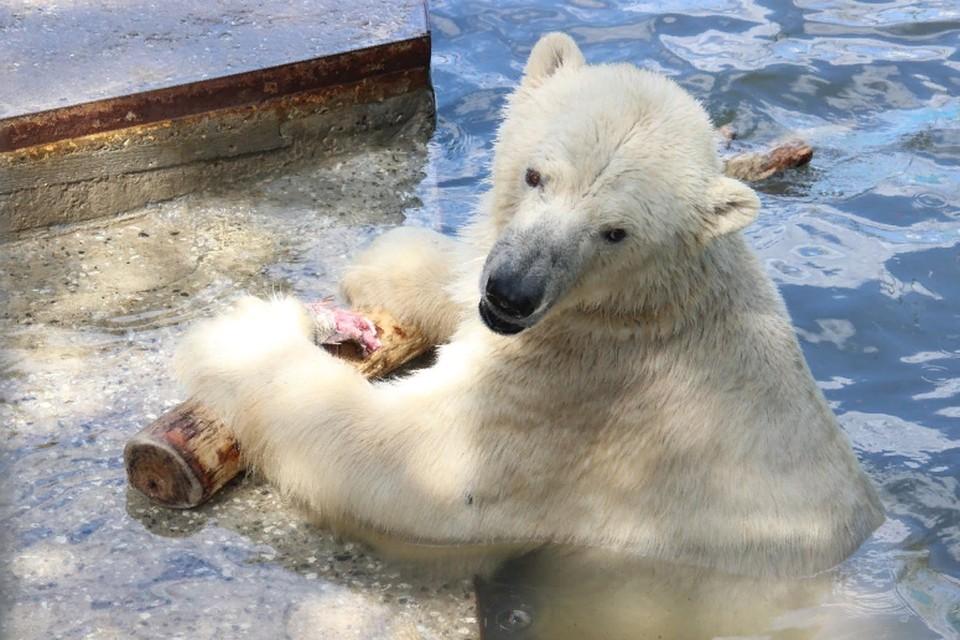 Для прогулок доступна территория зоопарка кроме кафе и крытых павильонов. Фото: Пермский зоопарк.