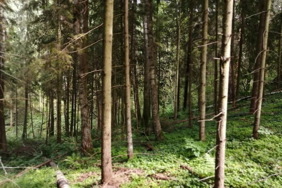 В Ярославле в лесополосе женщина потеряла сына