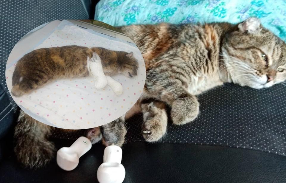 Раньше бедная кошка могла только ползать. ФОТО:предоставлено Анастасией Уткиной