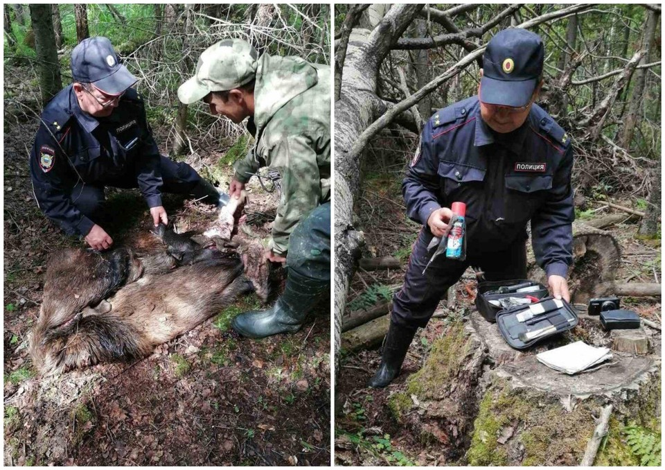 Охотники бросили шкуры и баллончик от репеллента. Фото: НП «Таганай»