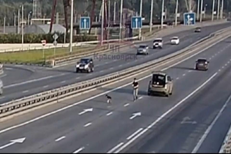 Водитель попытался поймать дворняжку Фото: ЧП-Красноярск