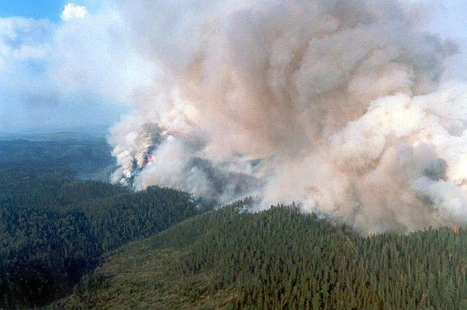 Лесные пожары в Красноярском крае. Фото: Лесопожарный центр
