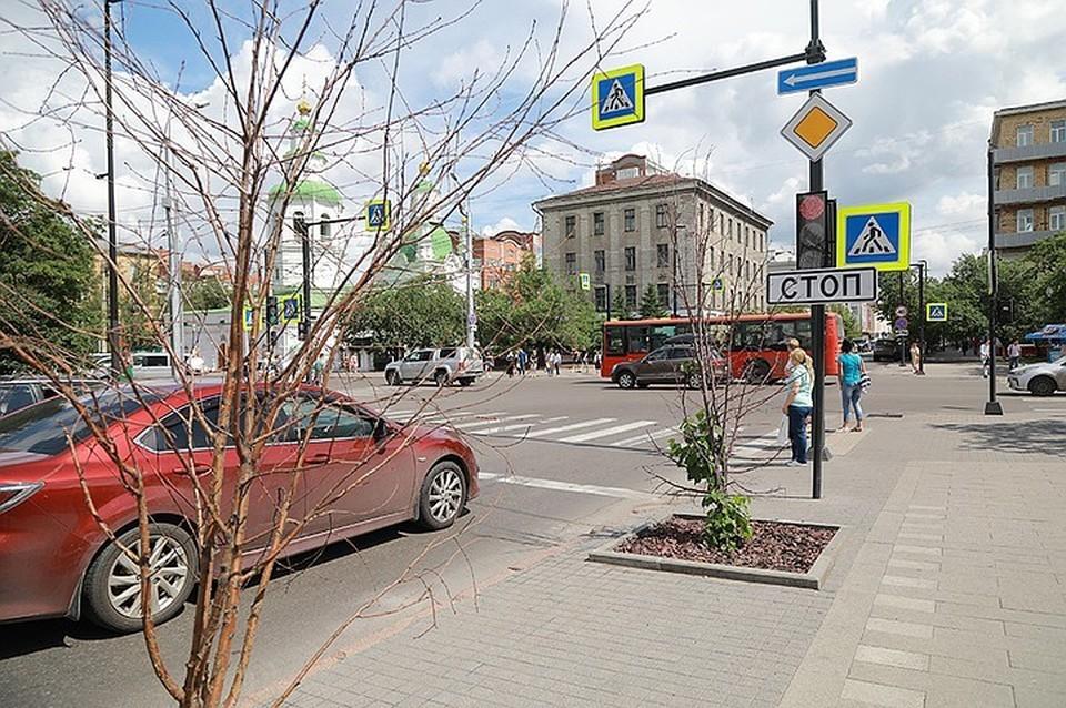 Где в Красноярске будут высаживать новые деревья