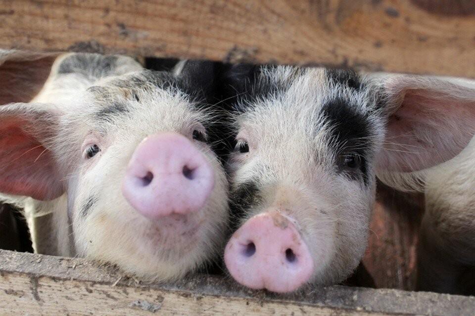 Ветеринарные врачи изымают животных из личных подсобных хозяйств
