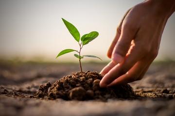 «Нездоровая конкуренция»: Эколог рассказал, как правильно высаживать деревья в городской среде
