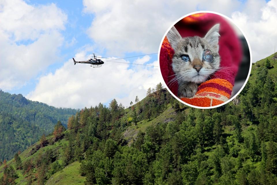 Слепых котят доставили на большую землю вертолетом.
