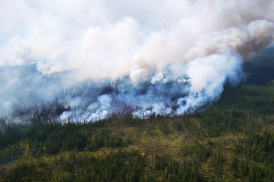 Борьба за лес Фото: Дмитрий КОМАРОВ