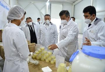 «Спрос есть»: Жээнбеков отметил экспортный потенциал молокоперерабатывающей отрасли Кыргызстана