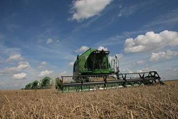 Экспорт растет, урожайность тоже: как переживает кризис калининградский АПК
