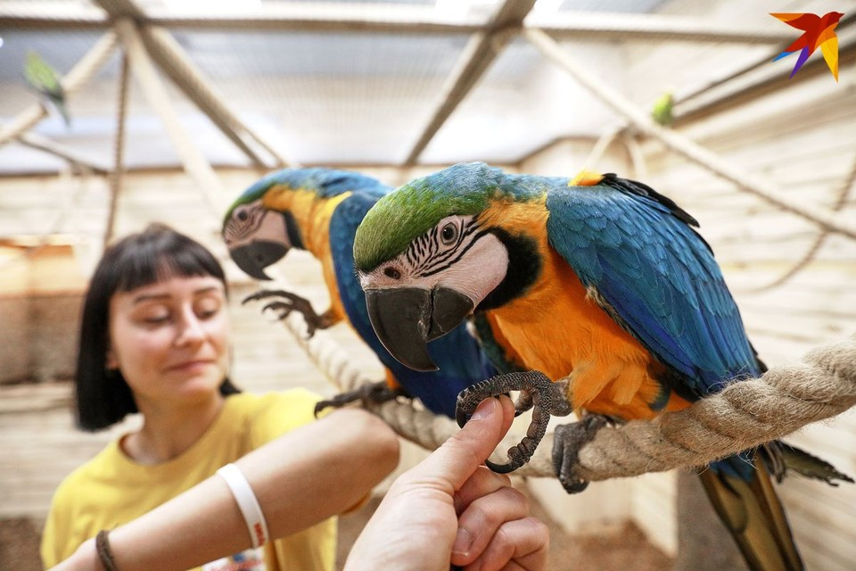 В Минске открылась большая попугайня.