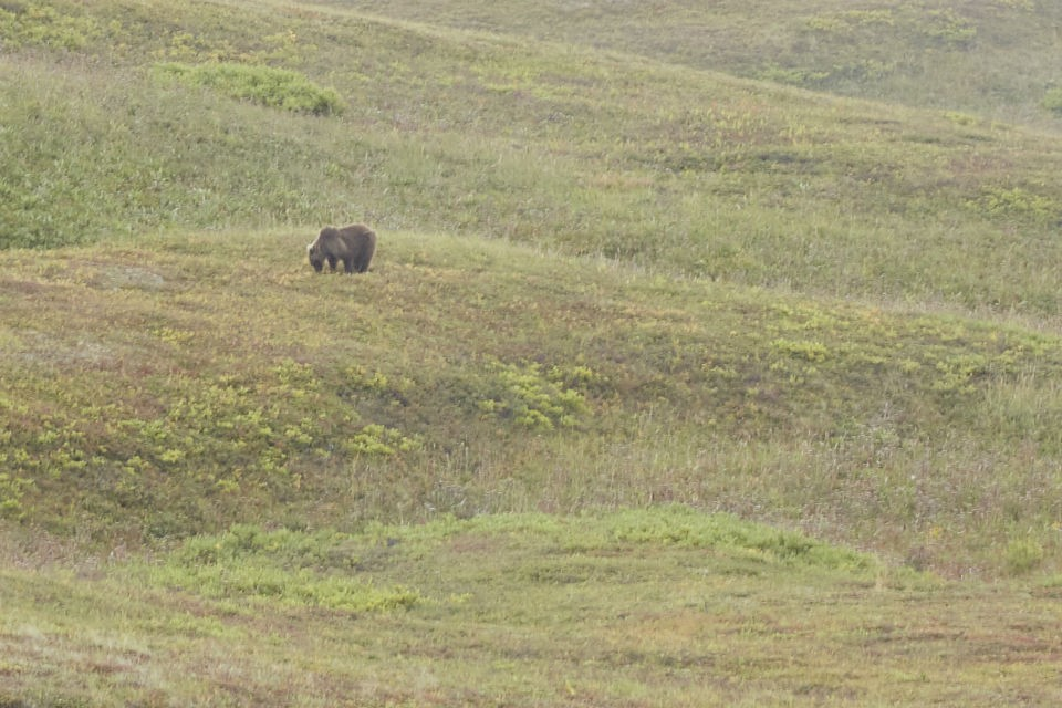 Грибники встретили медведя у озера. Фото: Кристина Безбородова