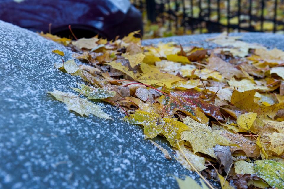 Заморозки до -1 градуса ждут в Ленобласти в воскресенье.