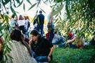 На территории ПсковГУ высадят курильский чай, Гинкго Билоба и айву