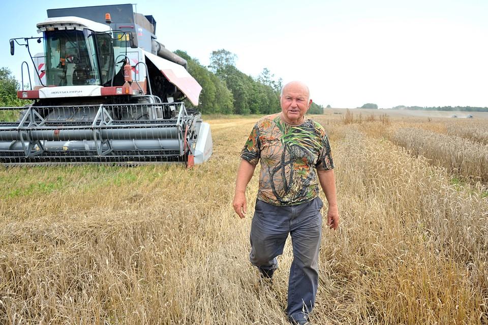 Юрий Лужков на своей ферме в поле во время сбора урожая пшеницы