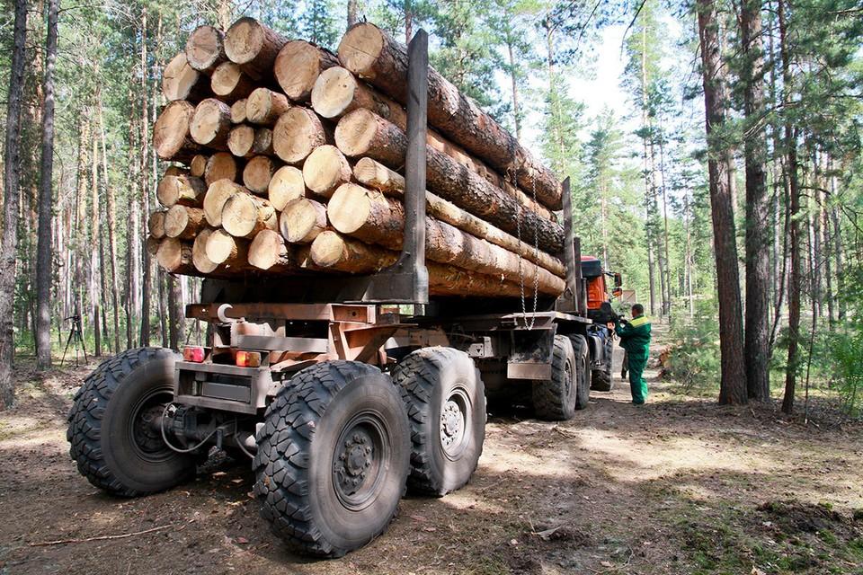 Можно повысить плату за использование древесины