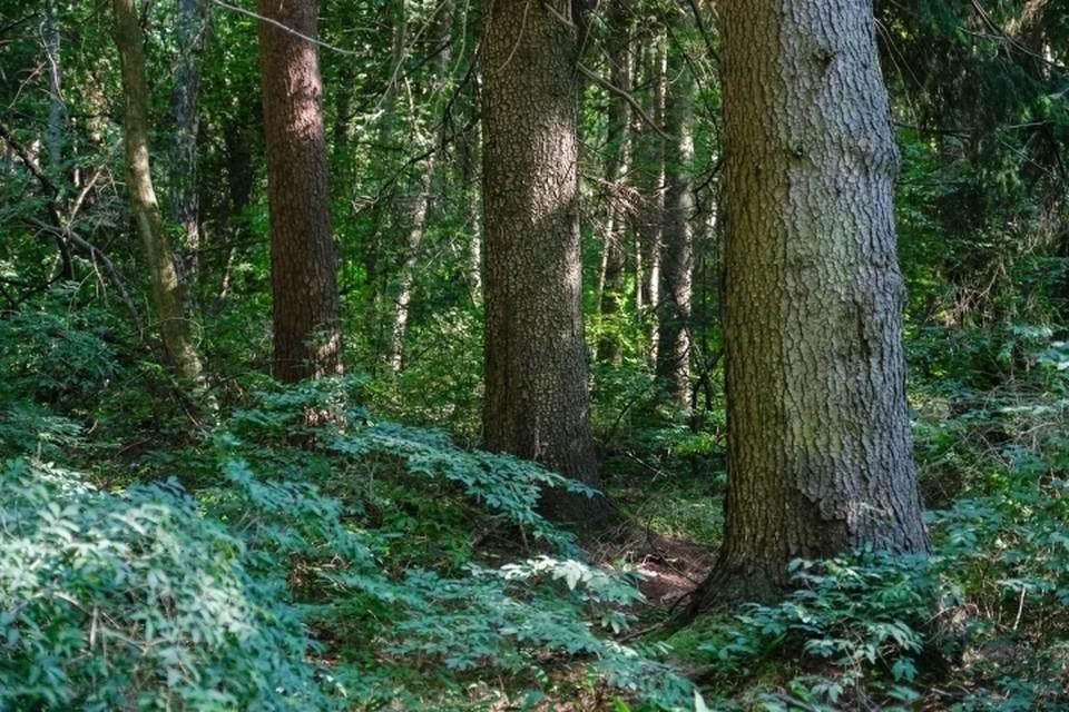 Труп мужчины, застрявшего в лесу под упавшим деревом, нашли под Гатчиной.