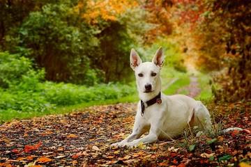 Как повысить иммунитет собаке