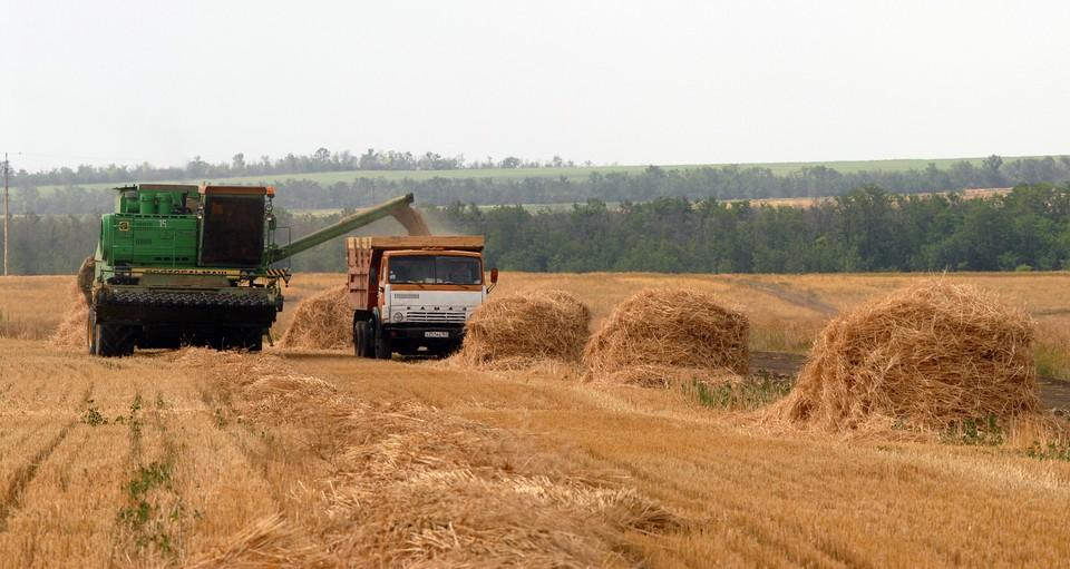 Россия значительно расширила свое присутствие на рынке пшеницы и стремится установить свое лидерство в данной сфере