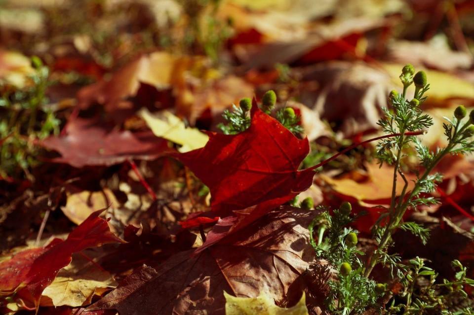Осени посвящали свои стихотворения многие гениальные поэты